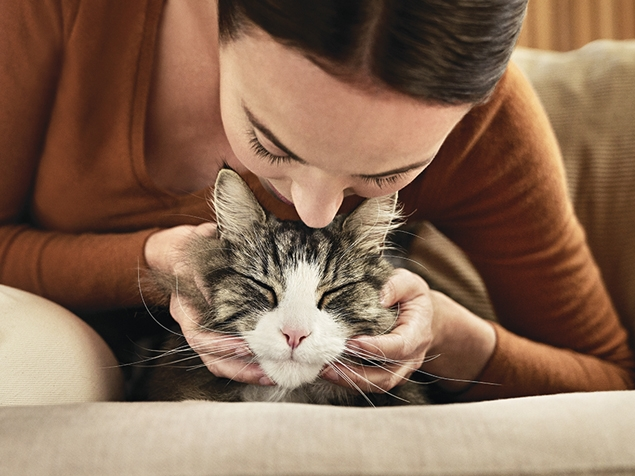 Cat and owner hypoallergic