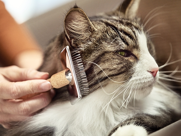 what are cat allergens?