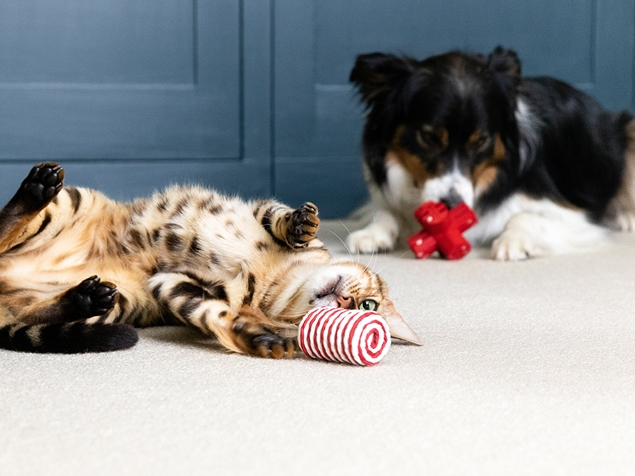 Cat and dog playing with toys