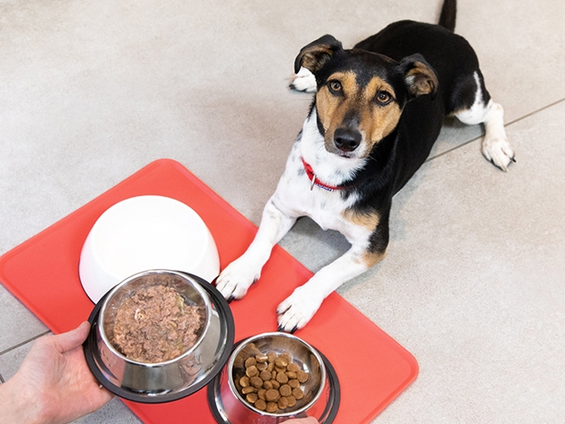 Dog lying in wait of food being given in a bowl