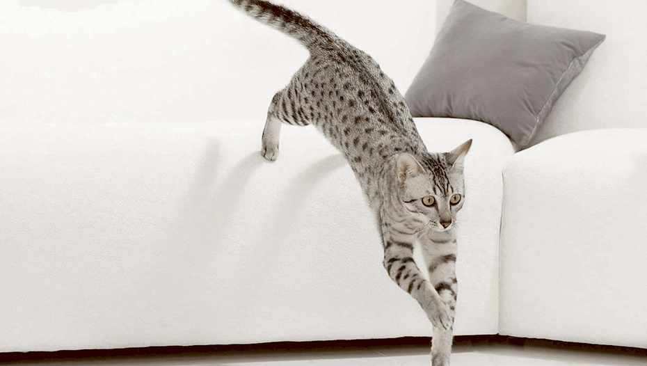 Cat leaping from sofa