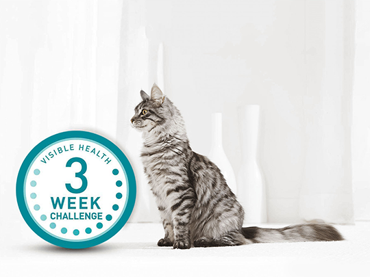3 Week Challenge logo and cat