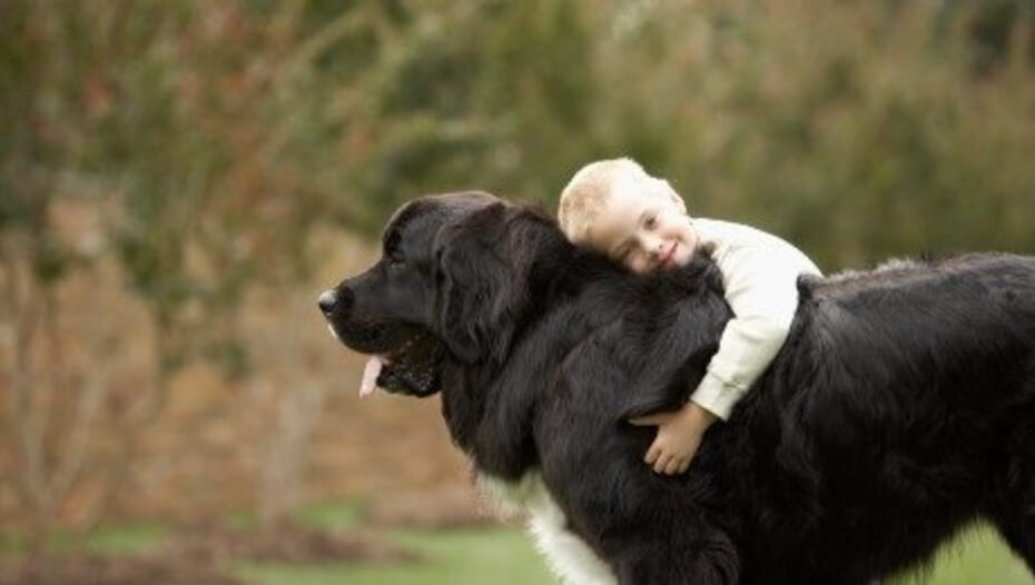 8 Big Fluffy Dog Breeds, Perfect for Snuggling Up With | Purina