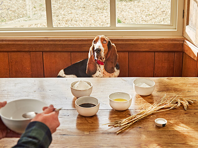 Bassett Hound sat at a table with owner