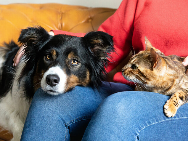 Dog and cat on owners lap
