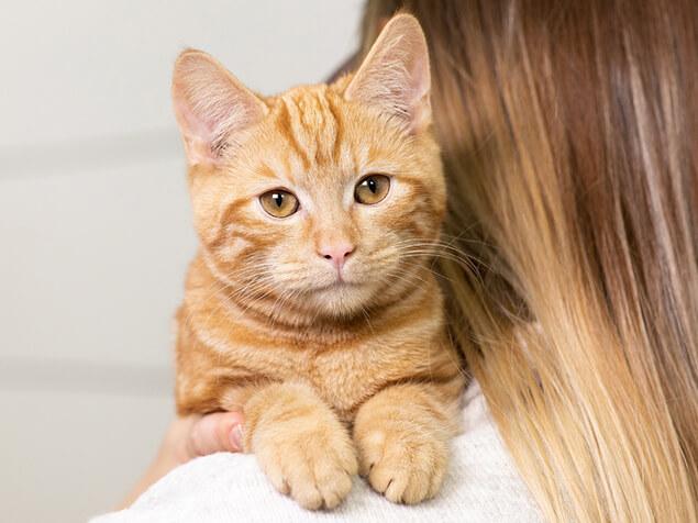 Ginger cat on owners shoulder