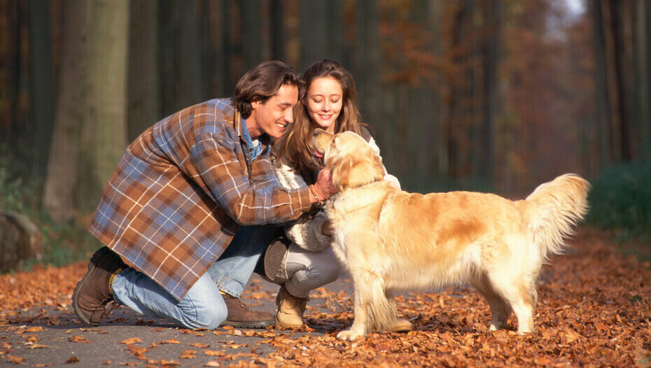 Golden Retriever in the wood's surrounded by leaves being stroked