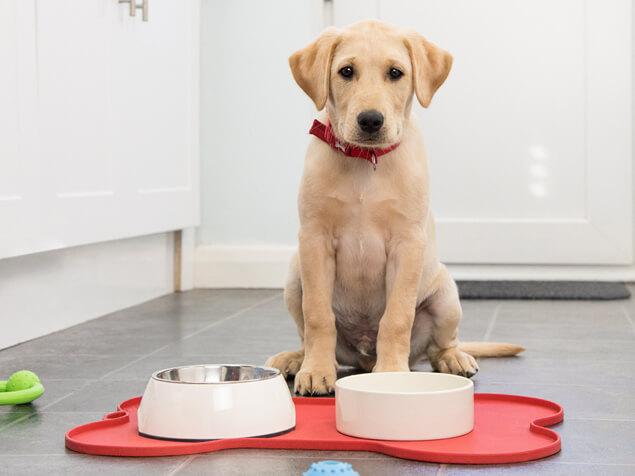 Dog sat in front of food bowls