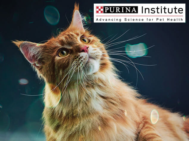 Purina Institute and innovation