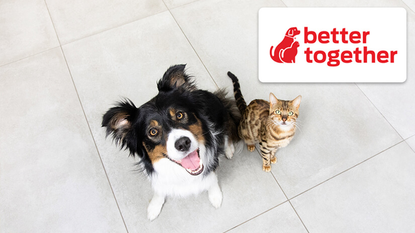 Better together logo and dog and cat