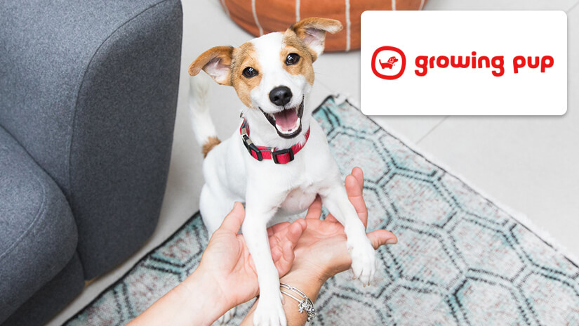 Growing pup logo and Jack Russell