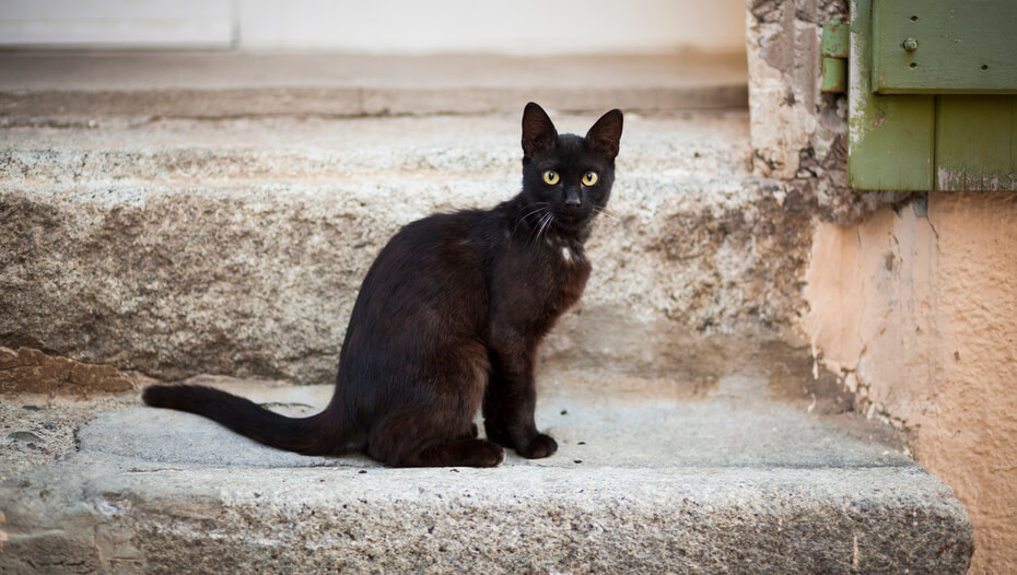 Black cat with green eyes sitting on step.