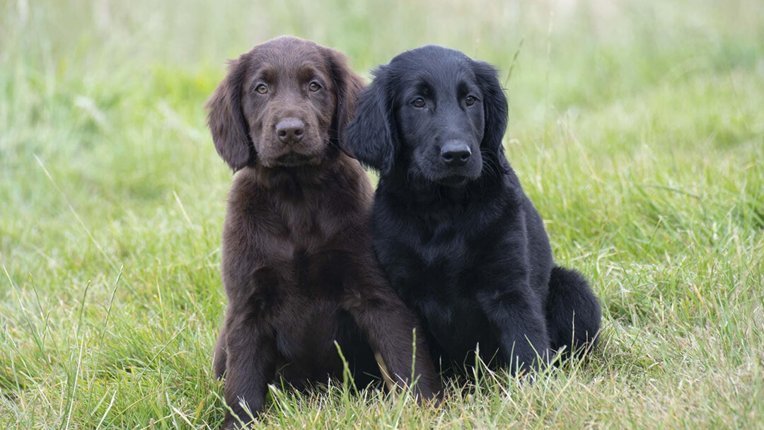 Brown and black dog sitting in grass field