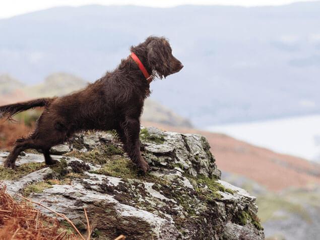 Adventuros dog