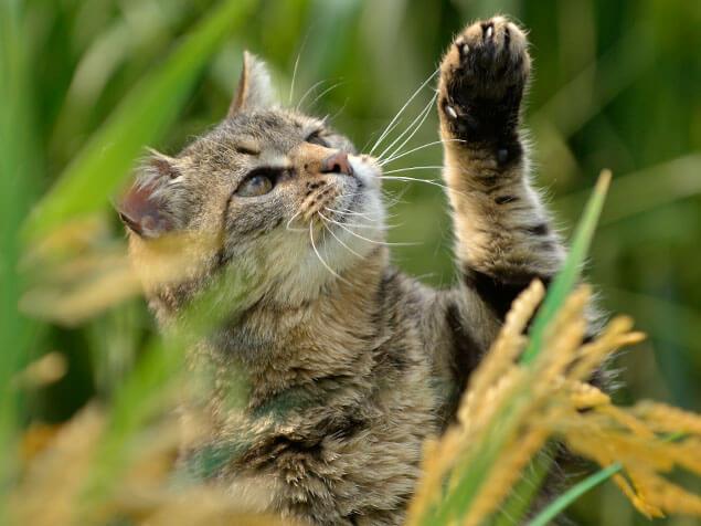 Beyond tabby cat