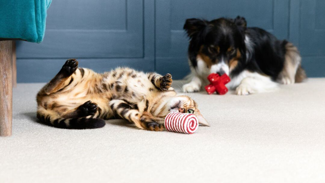 Cat and dogs lying on the floor playing with toys.