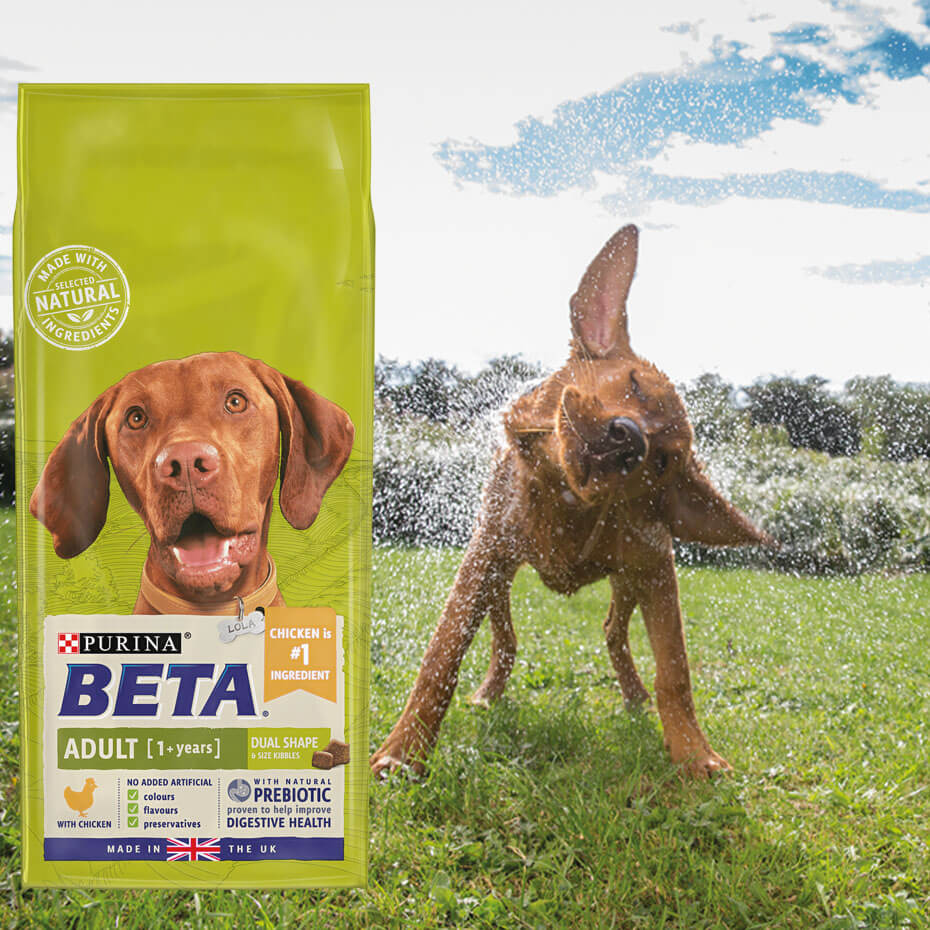 beta dog food