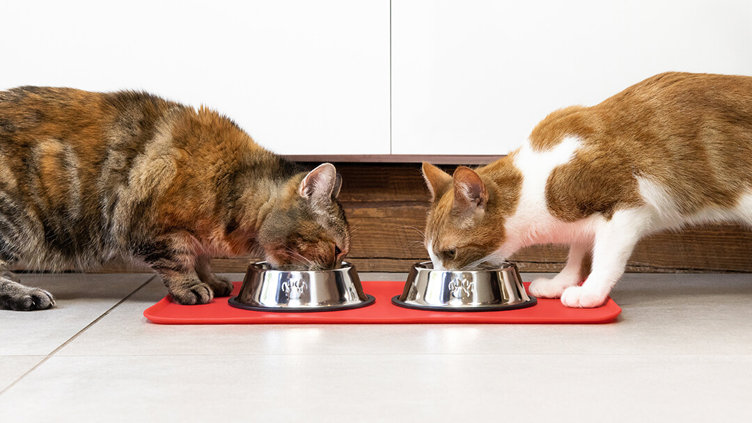 Two cats eating from a bowl