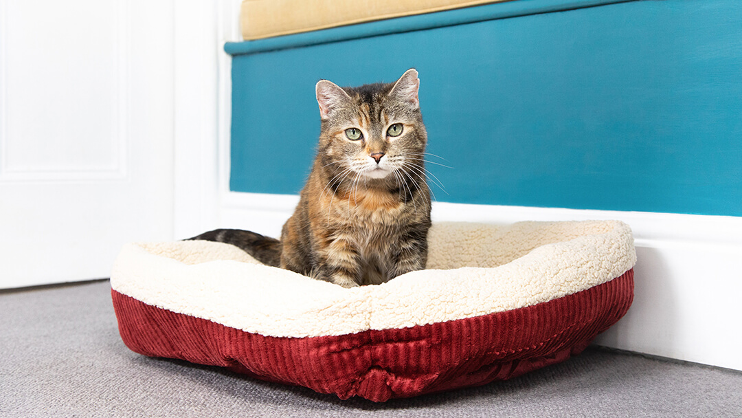 Cat sitting in red bed