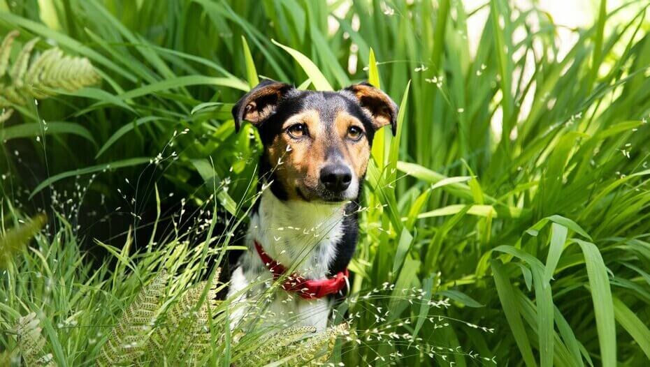 Small dog sitting in tall grass.