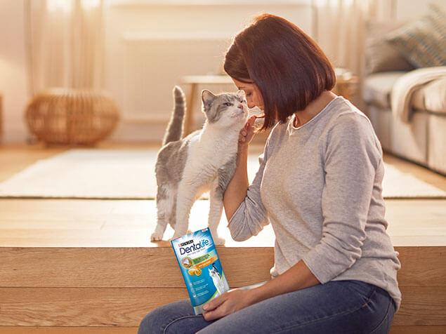Dentalife tabby cat