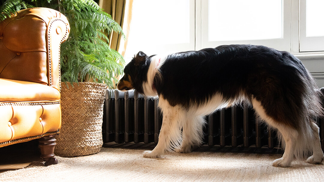 Dog sniffing plant in living room