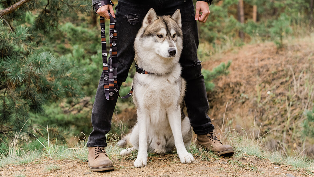 Dog standing with owner in woods