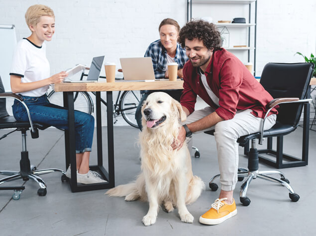 Golden retriever sat at desk with group working