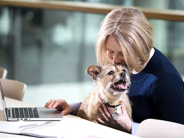 Terrier sat on woman's lap as she works on laptop
