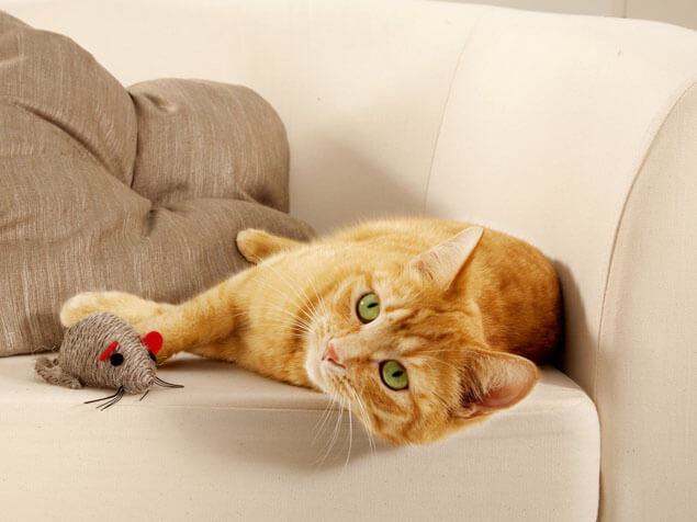ginger cat laying next to mouse toy