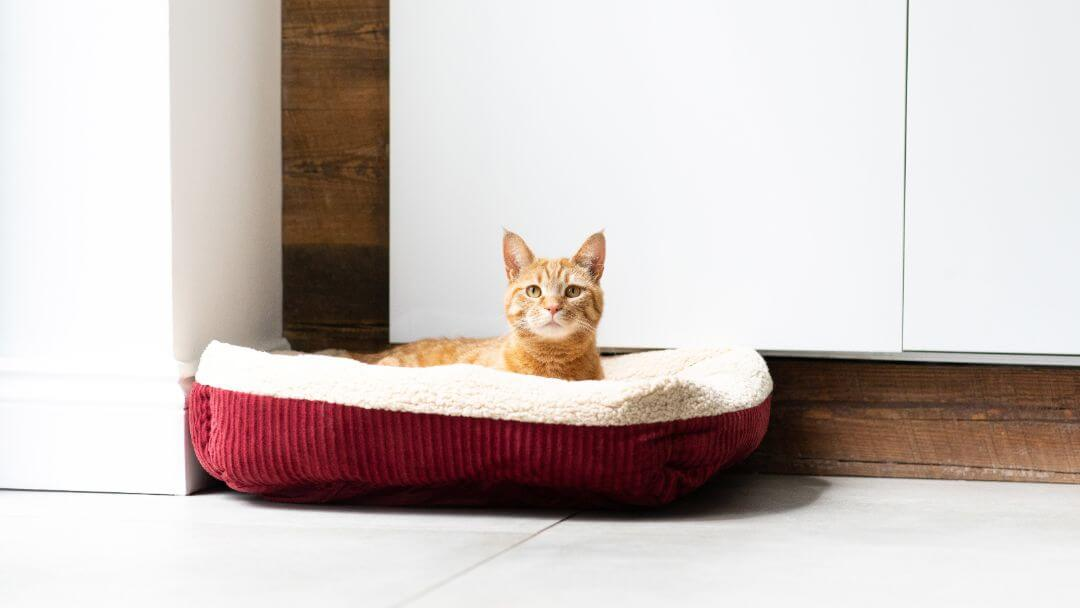 Ginger cat sitting in cat bed