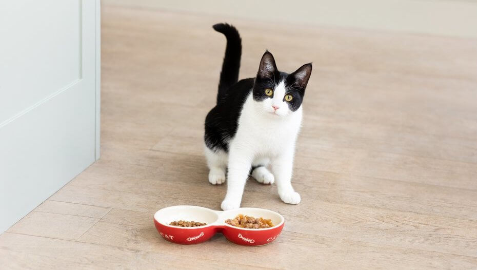 Cat Feeding Guide How Much Should I Feed My Cat Purina
