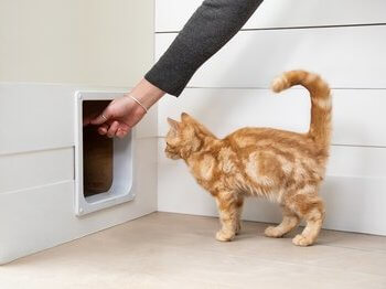 Cat being shown flap