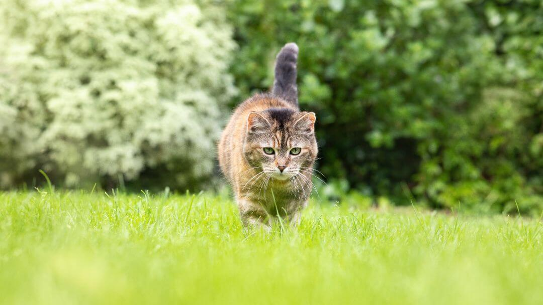 Cat prowling in grass