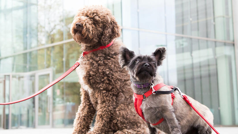 Two dogs sat at office building