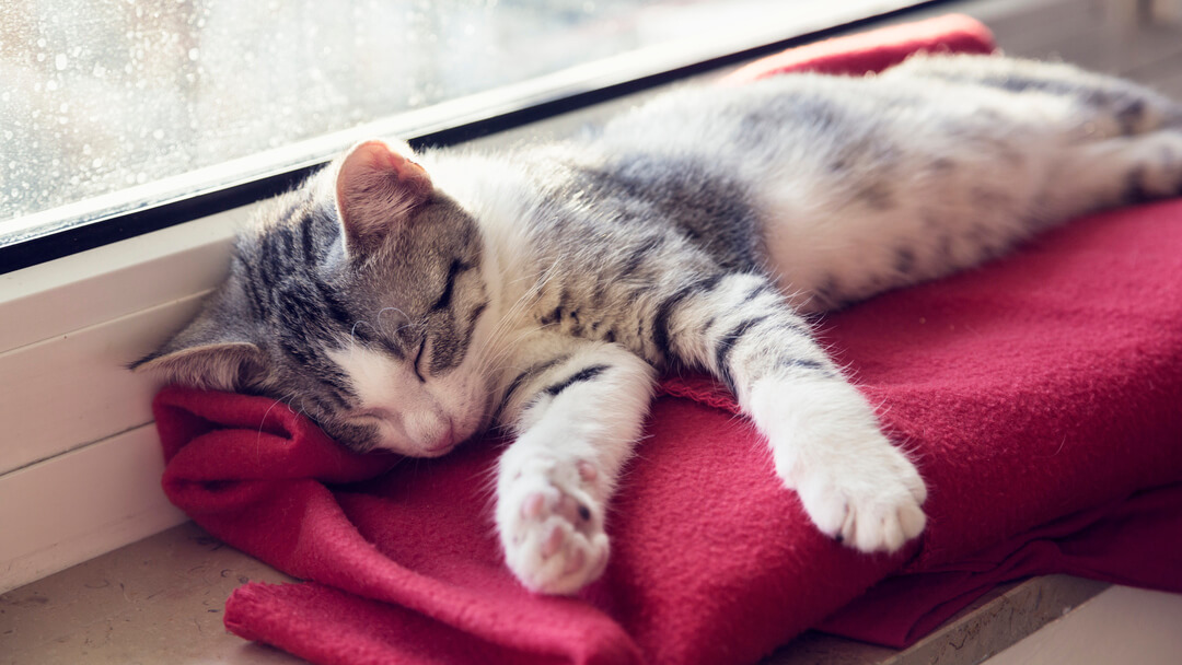 Kitten asleep on a red blanket next to the window