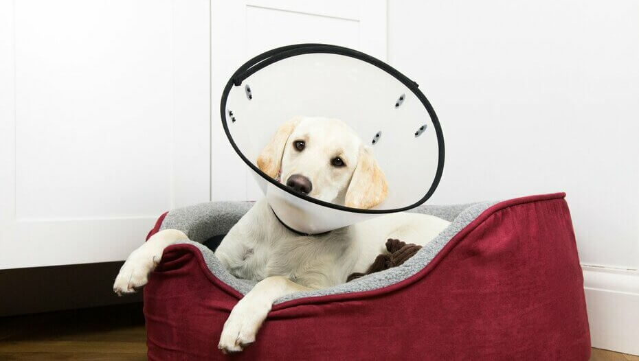 Puppy with cone in basket