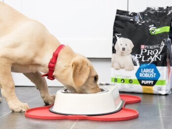 Puppy eating from bowl
