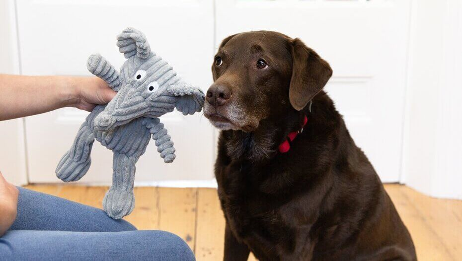 Dog encouraged with toy