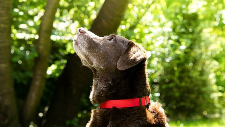 Dog looks up in garden