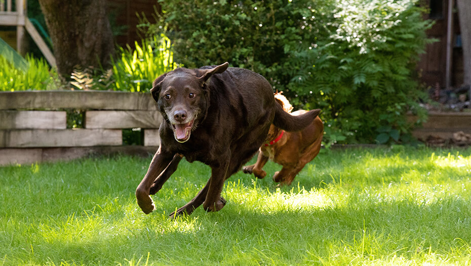 Dog running with another dog