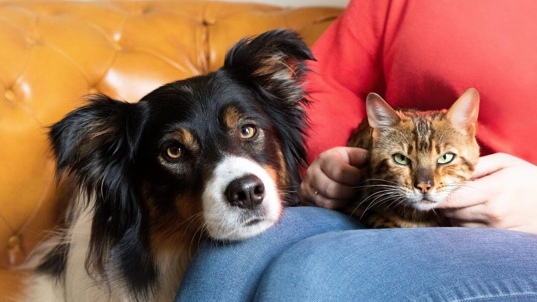 Why Do Dogs Chase Cats? How To Stop It?