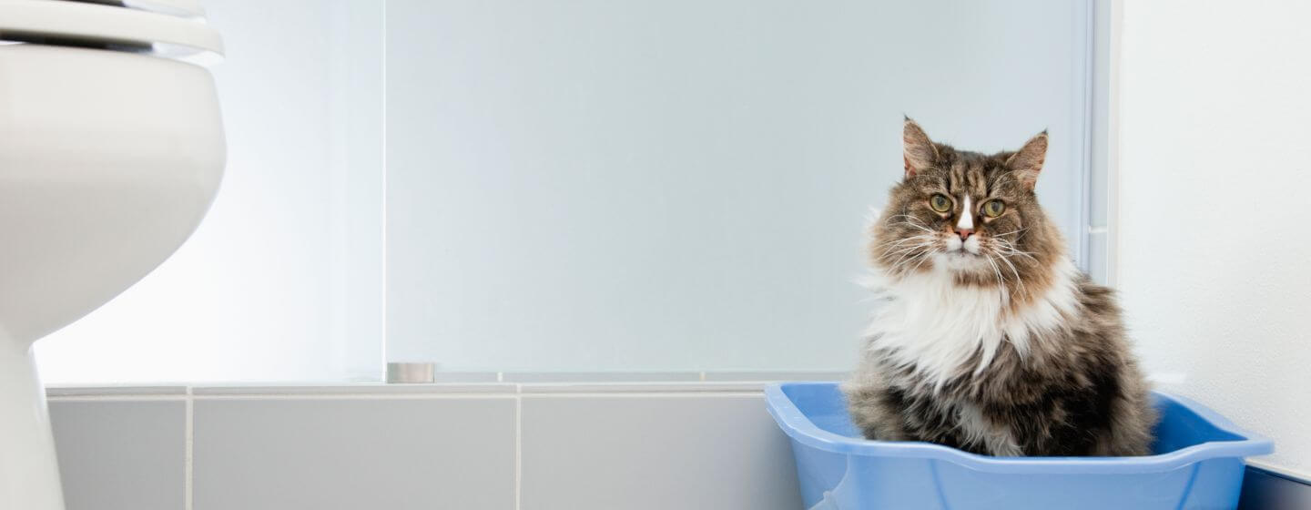 cat sitting in a blue litter box in the bathroom