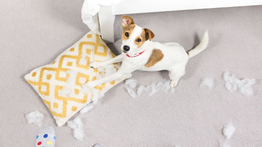 Puppy ripping up a pillow.
