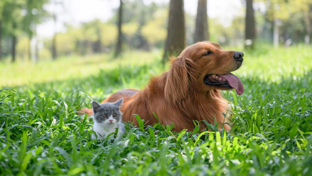 Small kitten sitting with dog in long grass