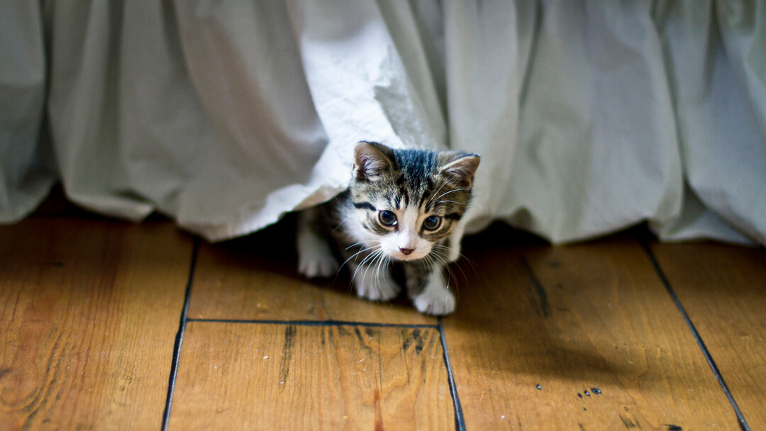 small kitten coming out from under a bed