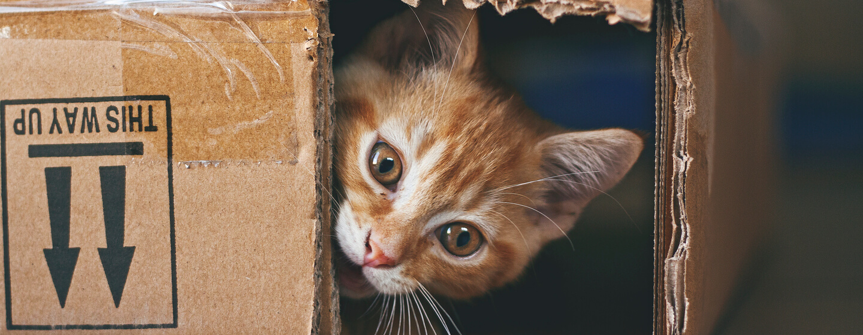 Cat Mental Stimulation Keep Your Indoor Cat Happy Purina
