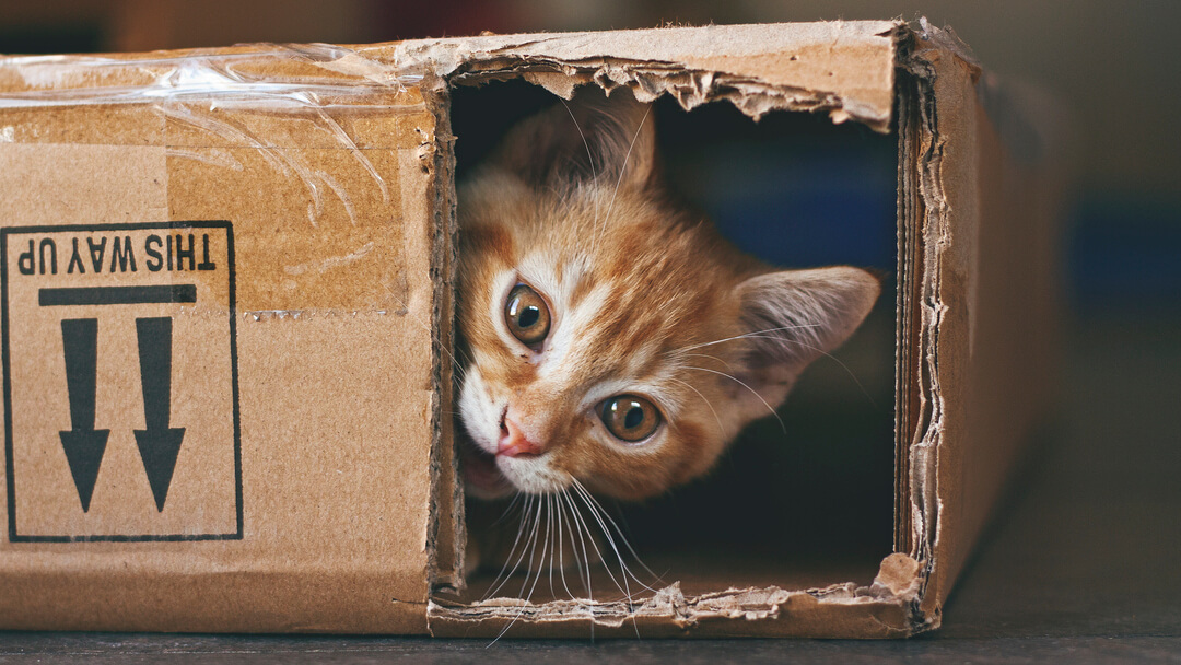 ginger cat hiding in a cardboard box