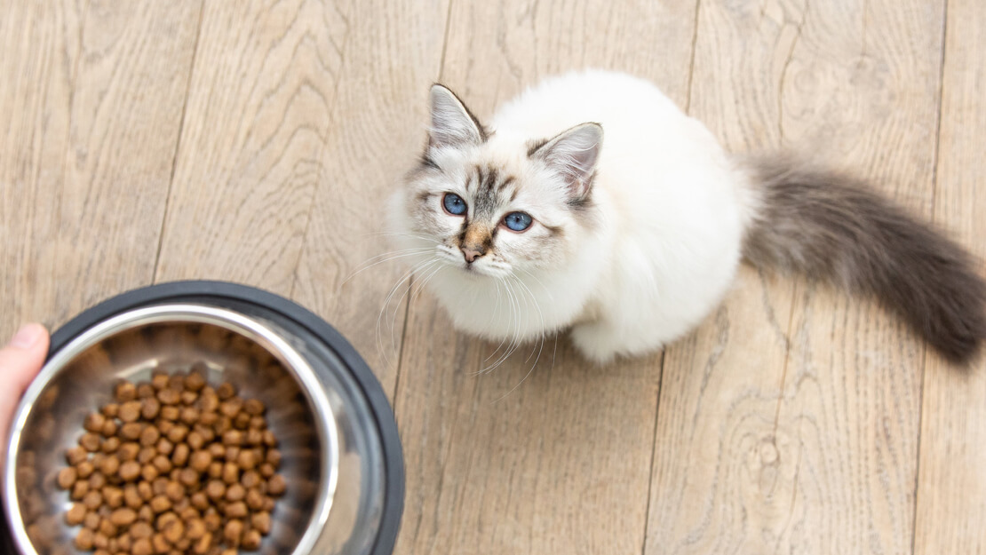 Cat food kitten dry listing page
