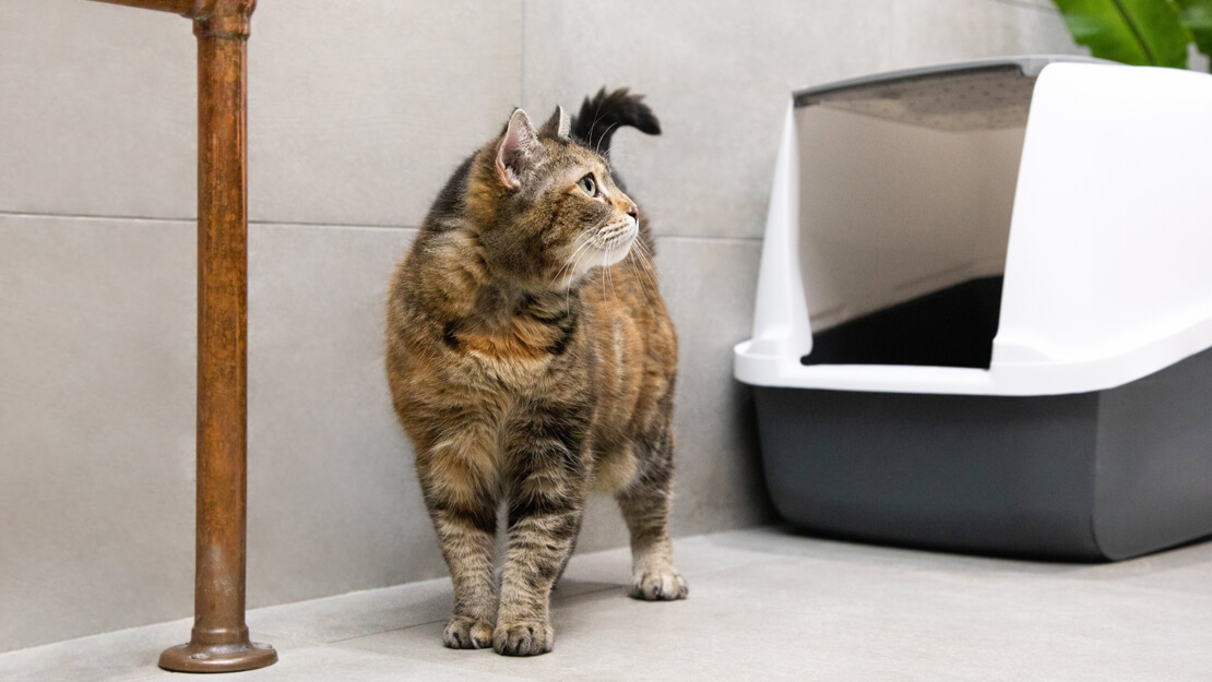 Cat food urinary care listing page